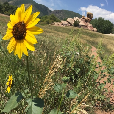 Foothills. Found running near a dear friend's home near Denver.