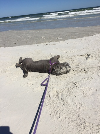 Nia's first trip to the beach!